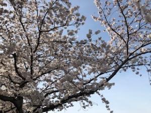 福山市東吉津町のメンズエステ Kerry(ケリー)の写メ日記 4月1日です画像